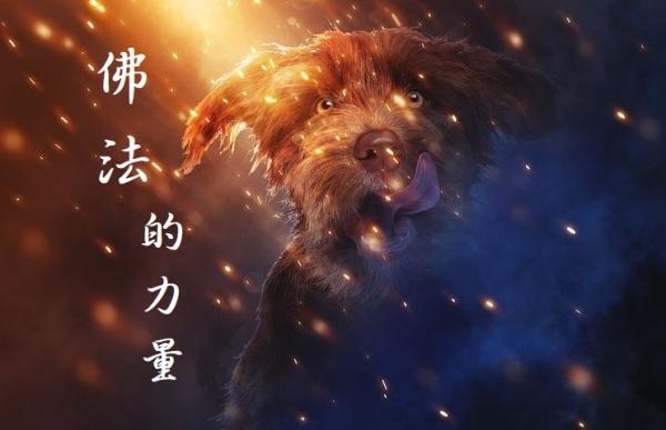 佛法的力量,感恩第三世多杰羌佛
