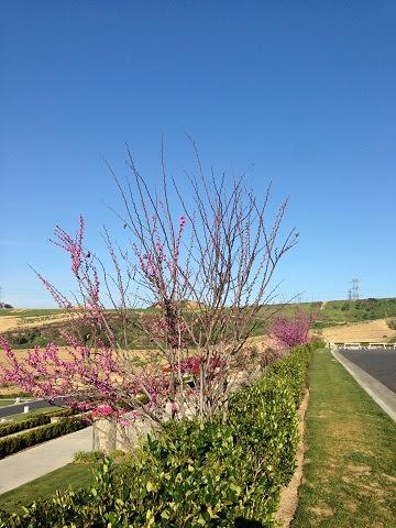 供奉因海玉尊的聖地上方,按季節應該已經枯乾的紅花樹,紅花開滿樹,生機盎然。極為殊勝百場聖會法會後天空中的吉祥雲與有金剛棒的月光。(第三世多杰羌佛佛法)